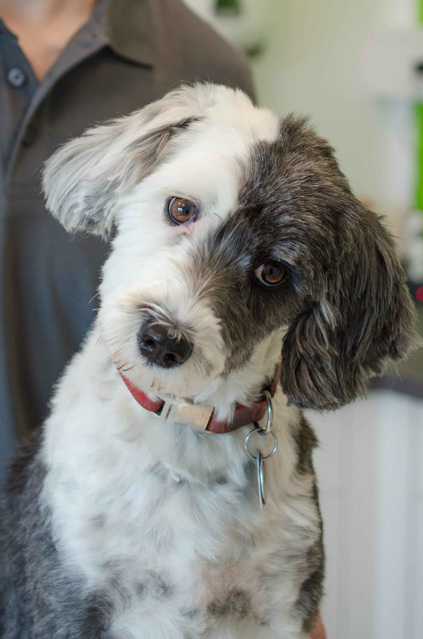 Hund Ida